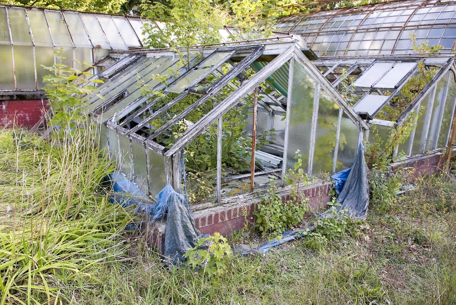 jardin-agronomie-tropical-5