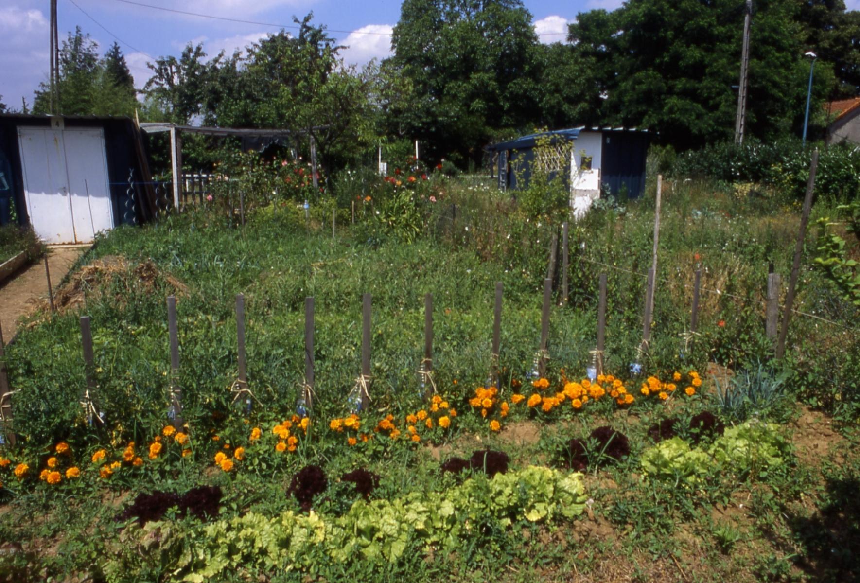 jardins-ouvriers-thiais–10–01