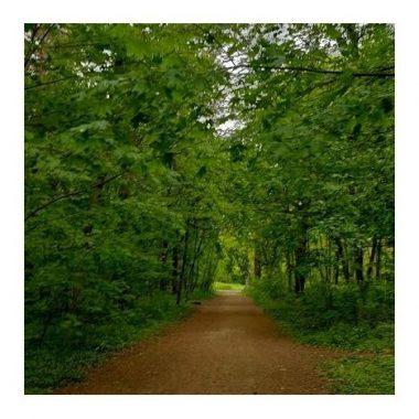 Marche et méditation au Bois de Vincennes