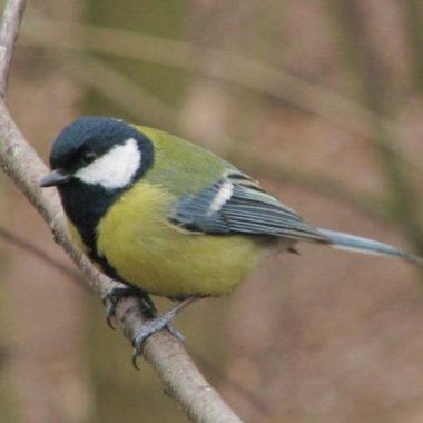Les oiseaux du Bois de Vincennes
