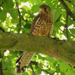 Sortie Nature LPO – Découverte des Oiseaux du Bois
