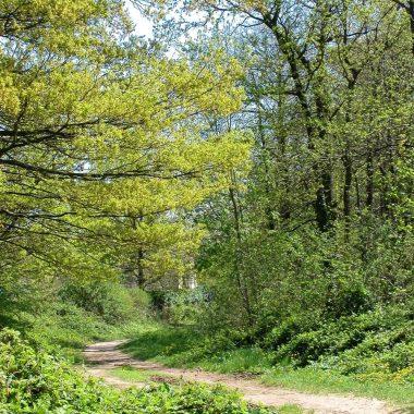 MASSIF FORESTIER DE L'ARC BOISÉ – CONSEIL DÉPARTEMENTAL DU VAL DE MARNE