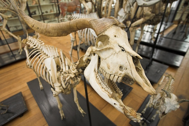 musee-ecole-veterinaire-maisons-alfort–24-1