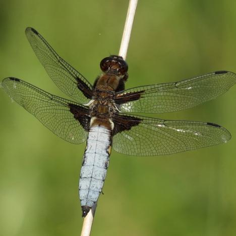 observation-des-libellules-du-bois-de-vincennes