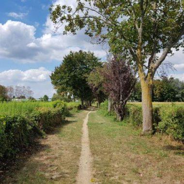 Paysages du Val-de-Marne : randonnée « Brie, rivières et forêts »
