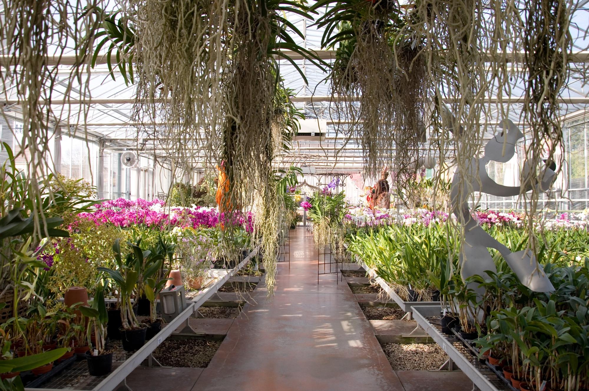serre-exposition-vente-01-orchidees-Vacherot—Lecoufle