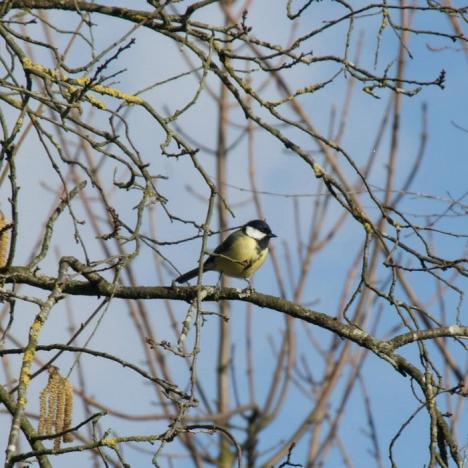 sortie-ornithologique-au-bois-de-vincennes
