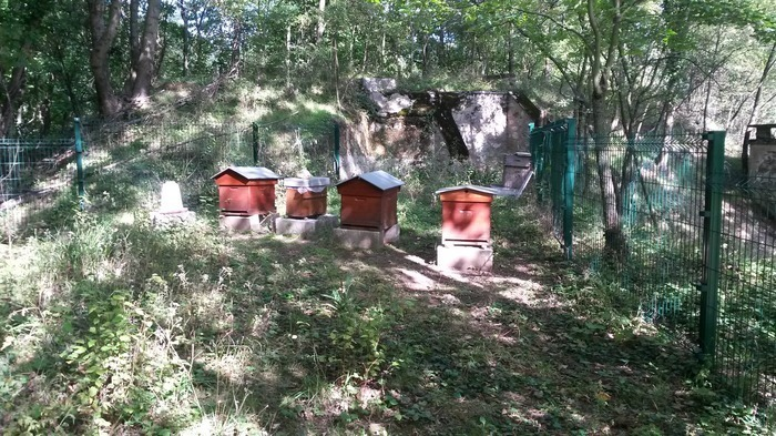 sucy-fort-ruche