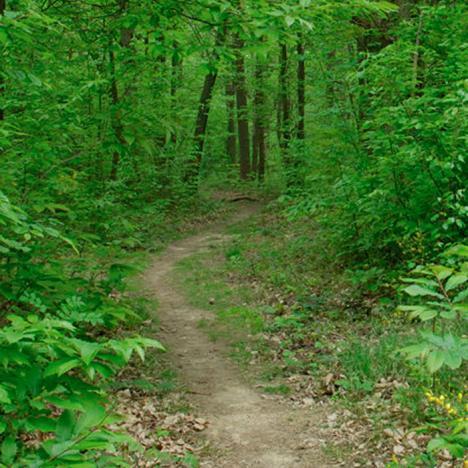 Tégéval – Jeu de piste en forêt