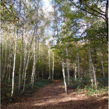 «Le bois de Vincennes aujourd'hui : une gestion complexe»